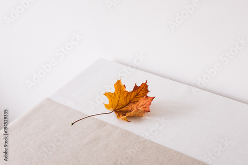 Single golden decaying maple leaf