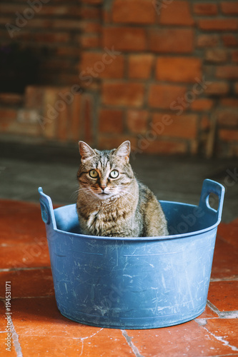 Cat in a washbowl