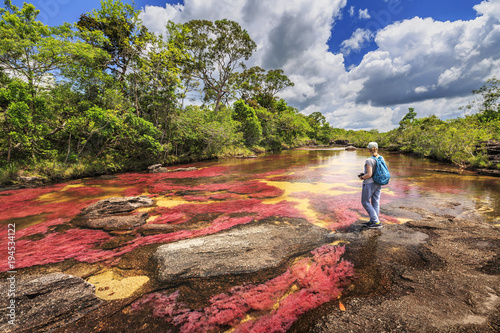 Foto op Plexiglas Zuid-Amerika land Cano Cristales (River of five colors), La Macarena, Meta, Colombia