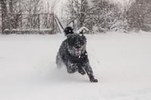 A Black Dog On The Snow