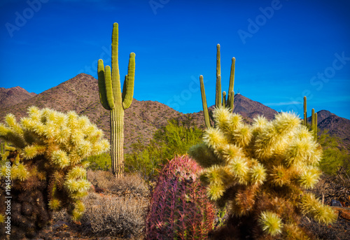 cactus in a desert in southwest United States