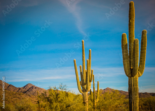 Foto op Canvas Cactus cactus in a desert in southwest United States