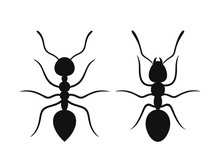 Ant Silhouette. Isolated Ants ...