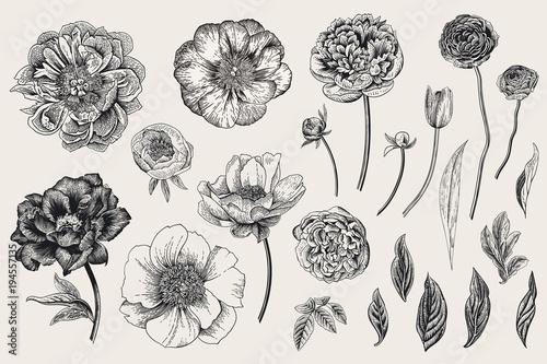 Set Spring Flowers Peonies Tulip Ranunculus Rose Vintage