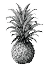 Pineapple Hand Drawing Vintage Engraving Style Isolate On White Background
