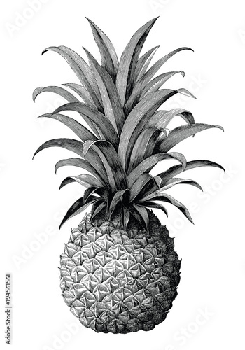 Fototapety, obrazy: Pineapple hand drawing vintage engraving style isolate on white background