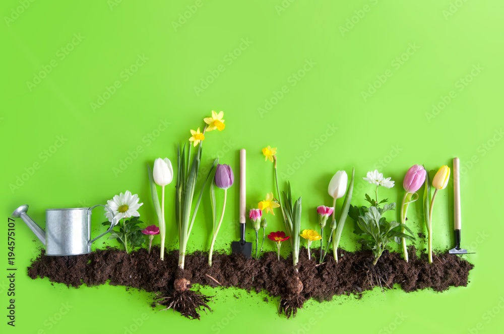 Fotografie, Obraz  Spring flower bed background