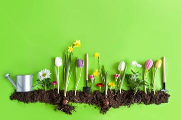 Spring flower bed background