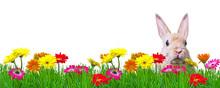 Easter Rabbit In Green Gras