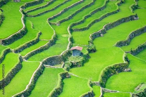 Papiers peints Vert chaux Philippines, Banaue : Rizières en terrasses vertes.