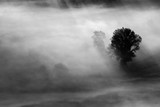 trees in the fog - black and white photo - 194608358