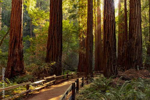 Poster Bois Trail through redwoods in Muir Woods National Monument near San Francisco, California, USA