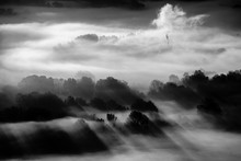 Trees In The Fog - Black And W...
