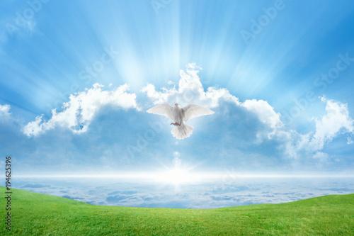 White dove Holy spirit bird flies in skies Canvas-taulu