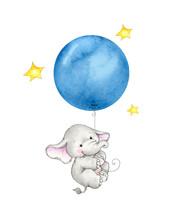 Baby Elephant Hanging On Blue ...
