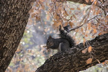 Squirrel Eating 2