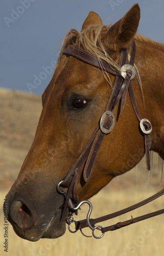 USA, Wyoming, Shell, The Hideout Ranch, Detail of Horse's Head