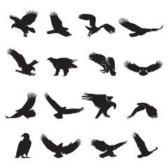 vektor siluete orla