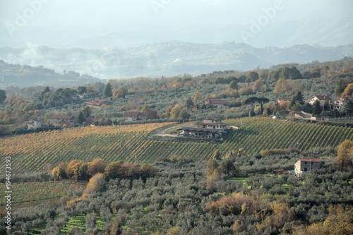 Vineyard near Piglio a small medieval town in the Lazio region, Italy Tablou Canvas