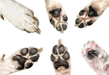 Close Up Of Dog Paws Isolated ...