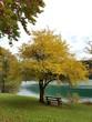 Baum und Bank beim Walchensee (DE)