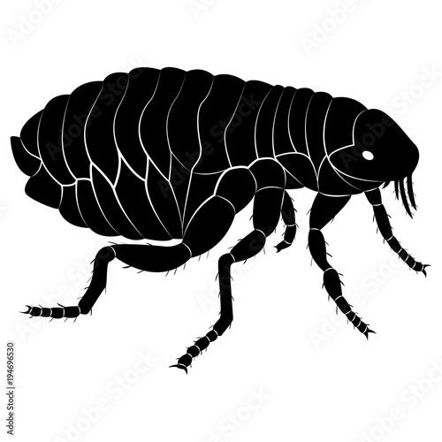 Foto  Vector image of flea silhouette