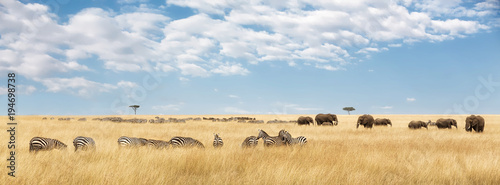 Elephants and zebra panorama Canvas Print