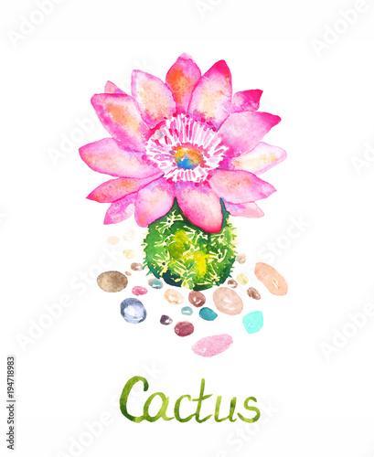 kaktus-z-rozowe-kwiaty-i-kolorowe-kamienie-wokol-recznie-malowane-akwarela