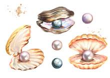 Pearls And Shells Set Hand Dra...