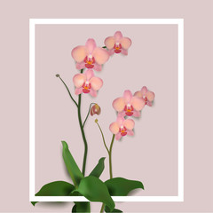 Panel Szklany 3D Flower Orchids Vector Illustration rose