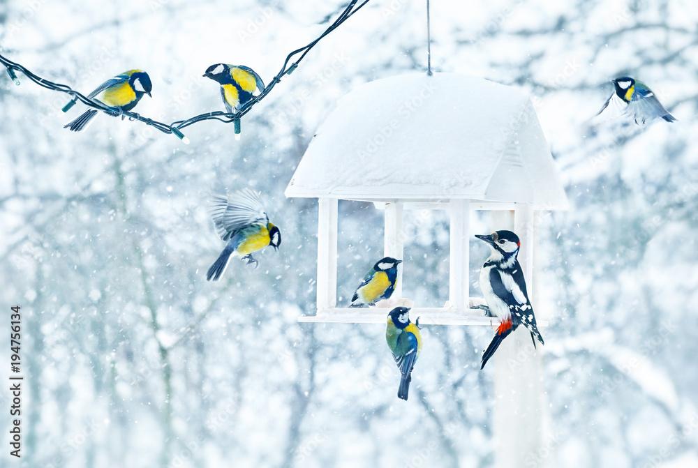 Tit and woodpecker birds in white wooden feeder winter snowy