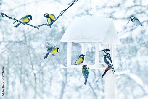 Fototapeta premium Tit i dzięcioł ptaki w białej drewnianej podajnik zimie śnieżnej