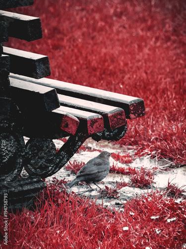 Láminas  Pajaro guareciendose de la lluvia bajo un banco