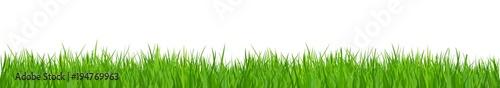 Deurstickers Gras Green grass, nature background - for stock