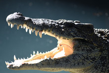 Photo Of The Cuban Crocodile Biting The Light