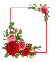 Red And Pink Rose Flowers With...