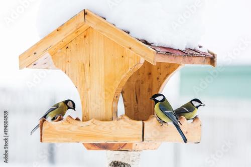 Fototapeta premium Karmnik dla ptaków z modraszką (Parus Caerulius) zimą