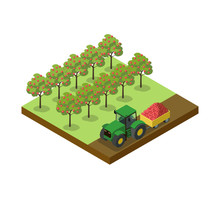 Crop Harvesting In Apple Orcha...
