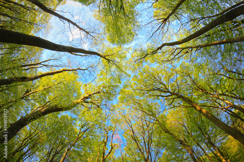 Fotografía Dreamy look in the treetops, Germany