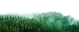 Fototapeta Las - green forest with mist and clear blank space