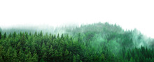 Green Forest With Mist And Clear Blank Space