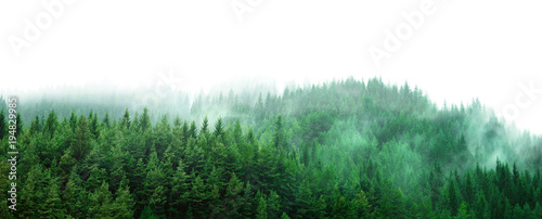 Foto op Canvas Bos green forest with mist and clear blank space