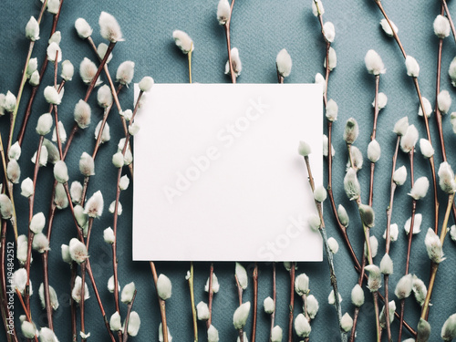 Staande foto Lente Pussy willow branches and blank card. Concept of Springtime