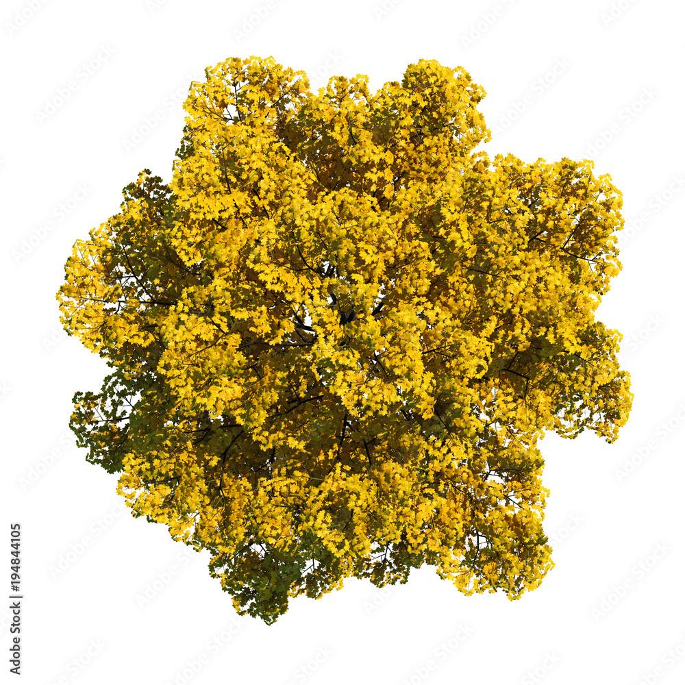 Top view yellow tree bush path selection