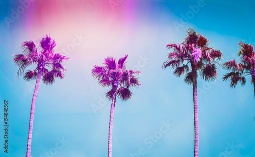 Foto auf Leinwand Los Angeles Ultra violet palms in the city of Los Angeles. Toning