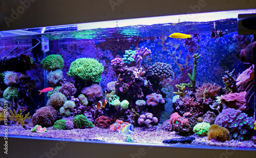Onder water Saltwater reef aquarium
