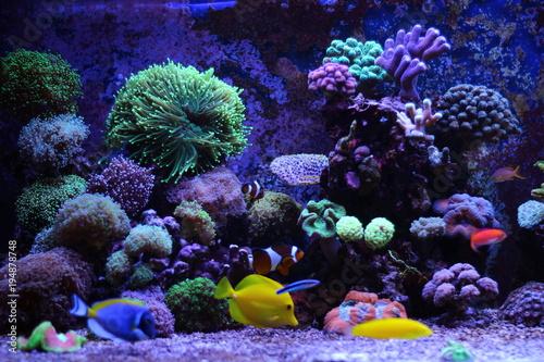 Poster Sous-marin Saltwater reff aquarium