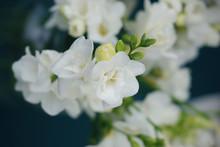 White Freesia Bouquet Of Flowe...