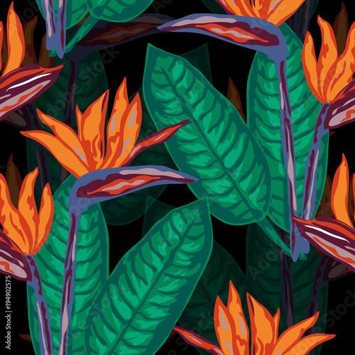 Deurstickers Paradijsvogel beautiful tropical seamless pattern