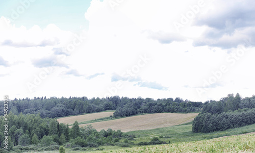Fotobehang Grijs Landscape is summer. Green trees and grass in a countryside land